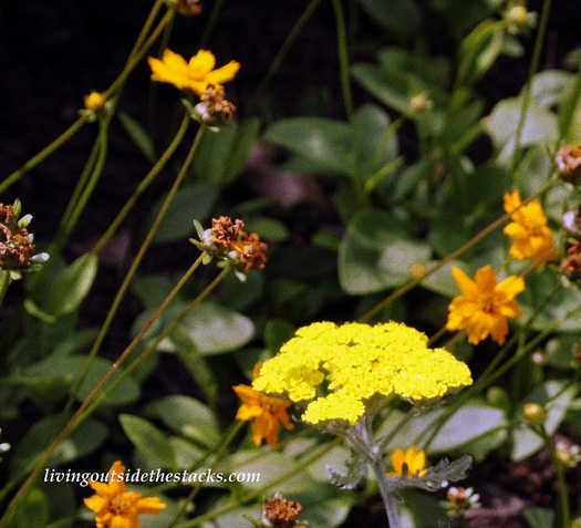 Crazy Days of Summer: Yellow
