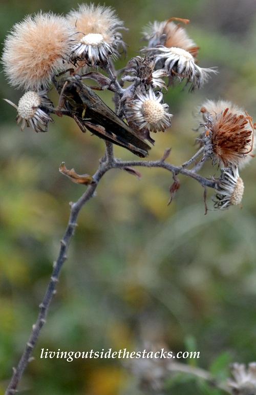 Shades of Autumn Photo Challenge: Brown Flowers