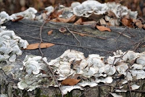 Shades of Autumn Photo Challenge: Brown Fungus