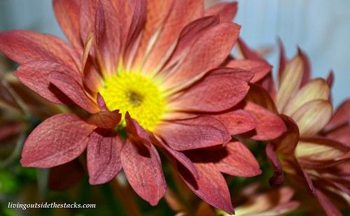 Shades of Autumn Photo Challenge: Orange Flower