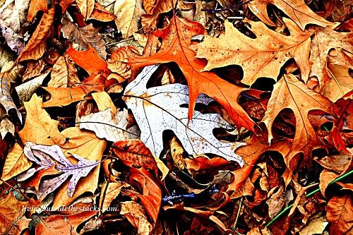 Shades of Autumn Photo Challenge: Orange Leaves