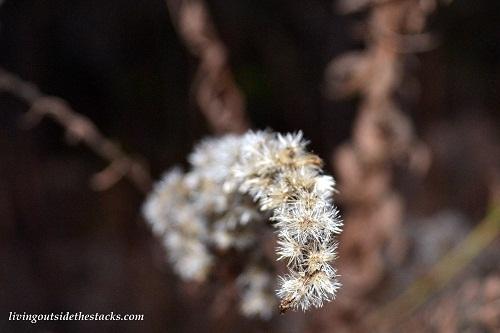 Shades of Autumn Photo Challenge: Goldenrod