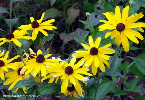 Shades of Autumn Photo Challenge: Yellow Flowers