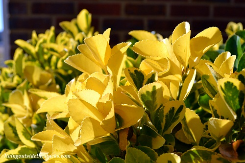 Shades of Autumn Photo Challenge: Yellow Leaves