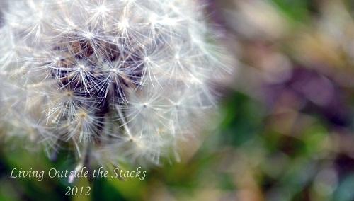 Natures Own {Scavenger Hunt Sunday}