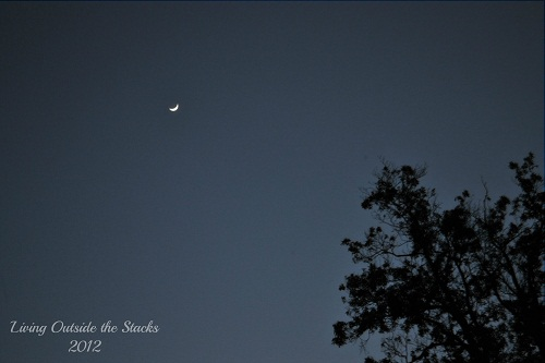 Evening Skies {Shoot. Edit. Submit.}