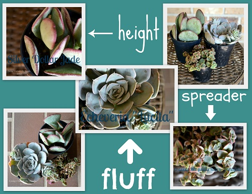 Succulent Garden Collage