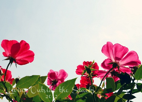 Autumn Flowers {Living Outside the Stacks}