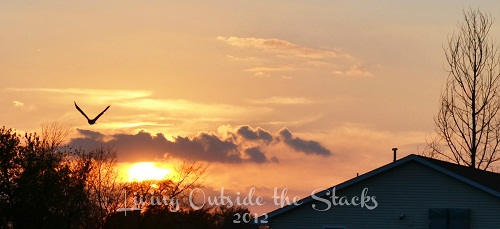 Autumn Sky {Living Outside the Stacks}
