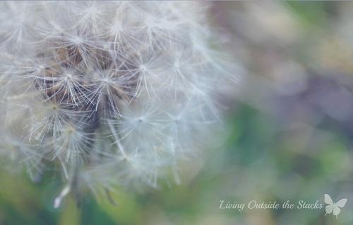 Wishing for Spring {Living Outside the Stacks}