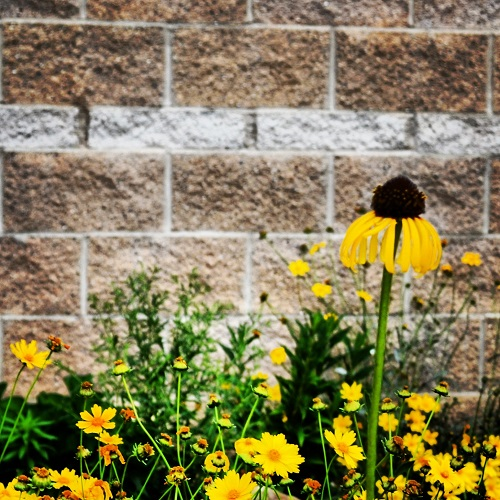 Yellow {Living Outside the Stacks}