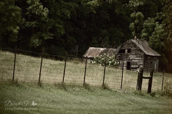 Old Hose {Living Outside the Stacks}