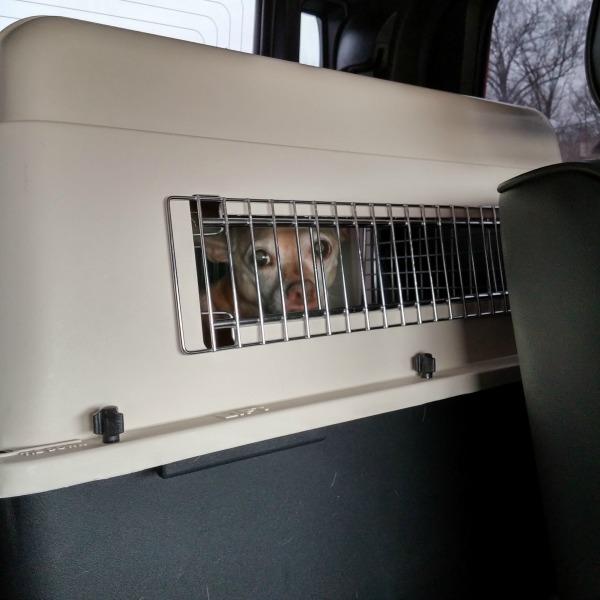 Day 46 Dog Jail {Living Outside the Stacks}