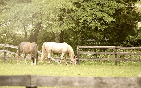 Horses #OurProject52 #VisitCape {Living Outside the Stacks} (3)