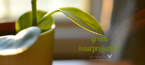 Green #OurProject52 {Living Outside the Stacks}