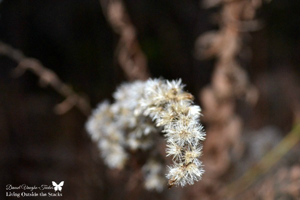 Out of Focus Goldenrod {Living Outside the Stacks} #OurProject52