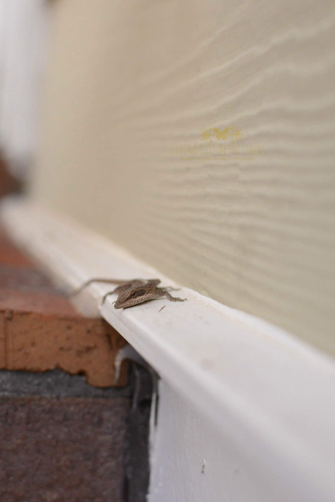 Happiness is a gecko {living outside the stacks}