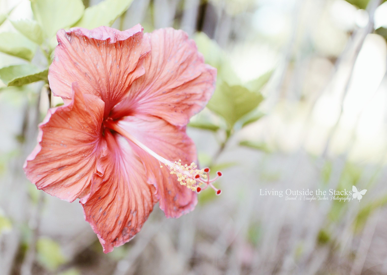 Flower Sandestin FL {living outside the stacks}