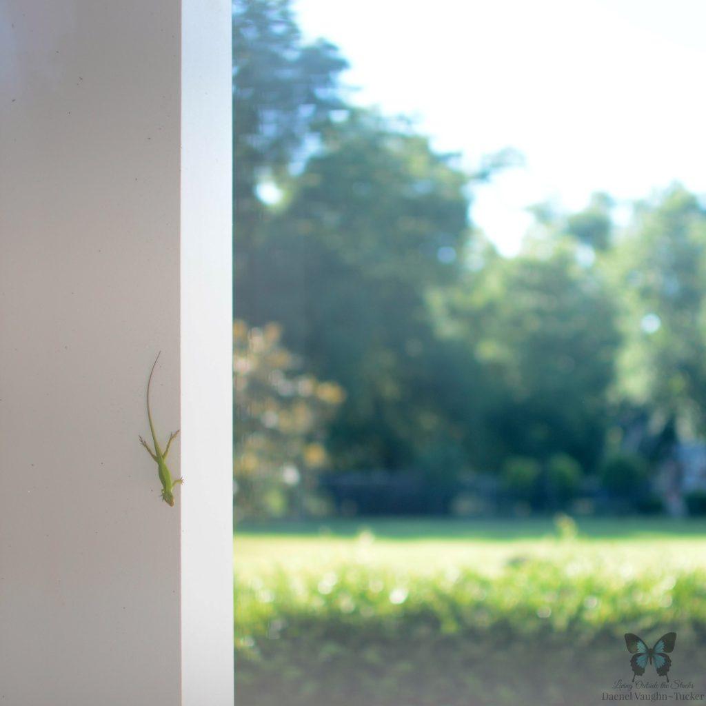 Lizard {living outside the stacks}