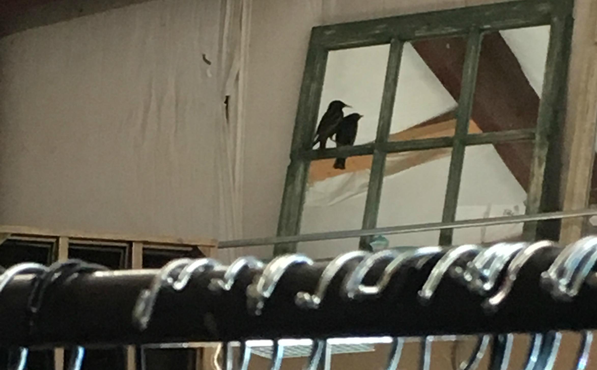 Bird in the Store