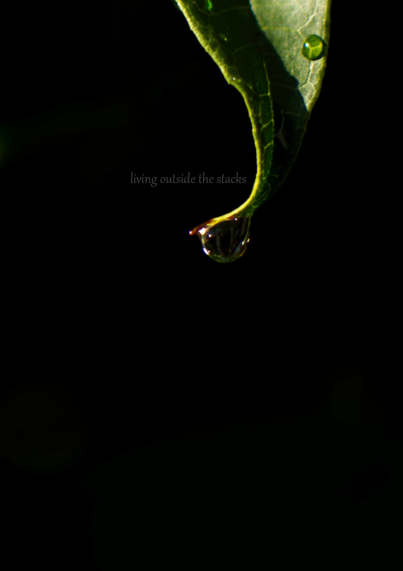 Leaf with Water Droplet {living outside the stacks}