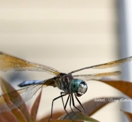 Instagram Model aka Dragonfly {living outside the stacks}