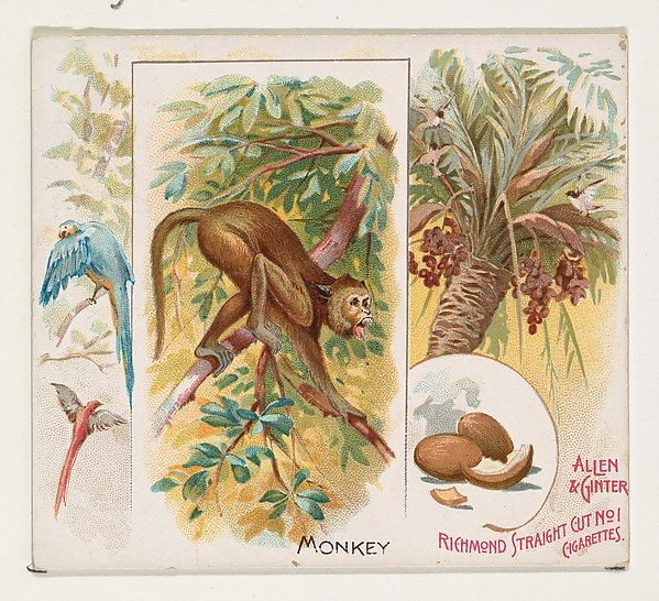 Monkey from Quadrupeds series (N41) for Allen and Ginter Cigarettes from The Met (public domain) #StyleImitatingArt
