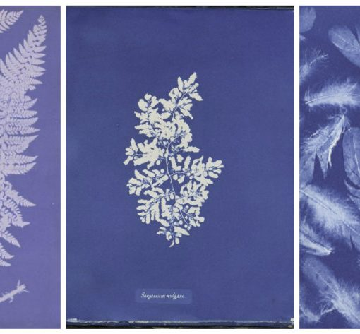 Anna Atkins Collage {Style Imitating Art}