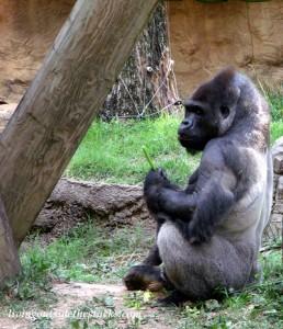 Memphis Zoo and Aquarium