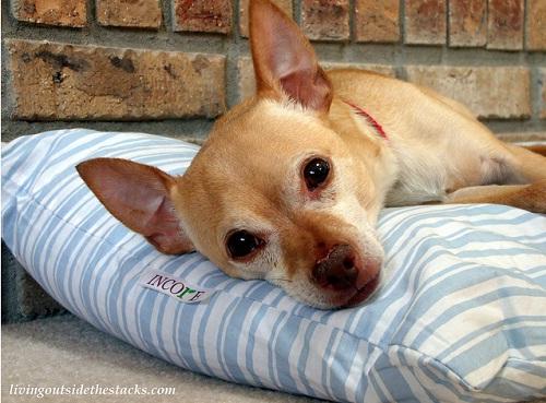iheartfaces Photo Challenge: Pet Week