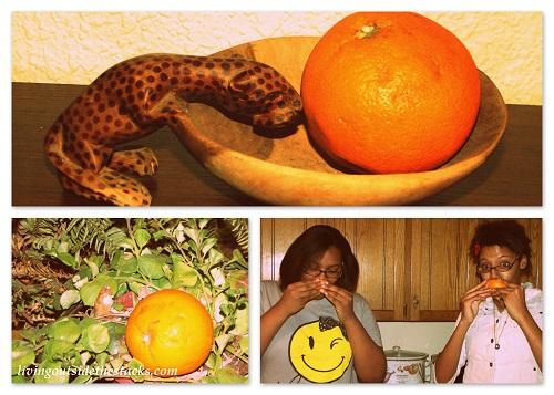 Shades of Autumn Photo Challenge: Orange