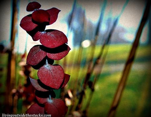 Red Leaves ~ Edit