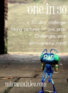 Photography Challenge {One in Thirty}