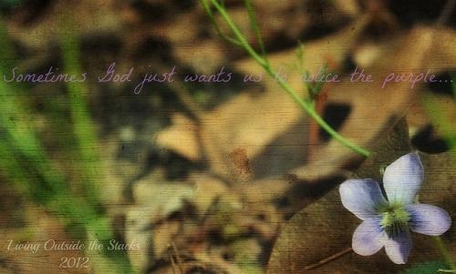 Purple Flower {Shoot. Edit. Submit.}