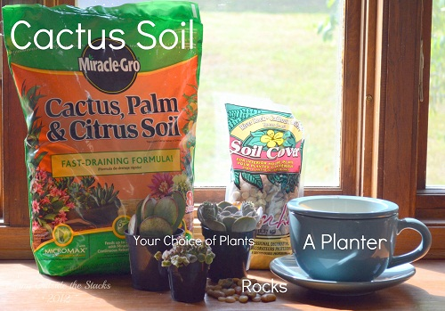 Succulent Garden Supplies