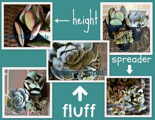 Succulent Garden Collage