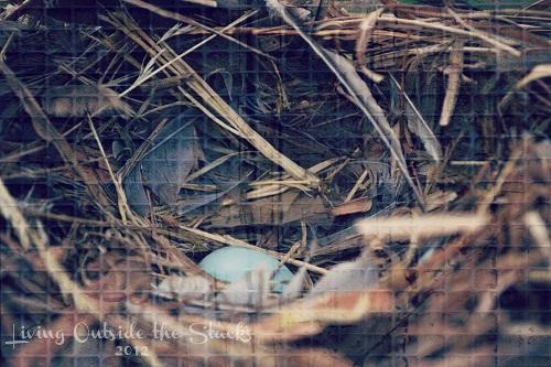 Abandoned Egg