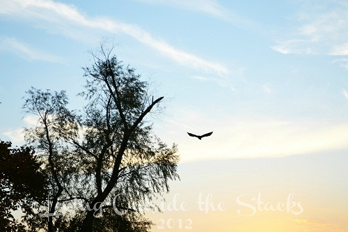 Autumn Sky {Living Outside the Stacks}