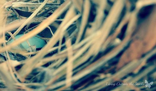 Nest {Living Outside the Stacks}