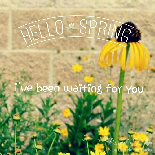 Happy Spring {Living Outside the Stacks}