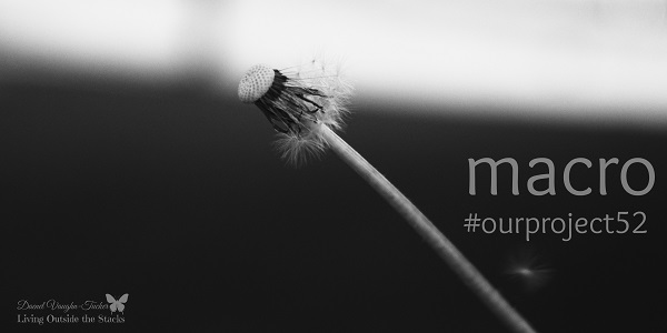 Dandelion  {Living Outside the Stacks} #OurProject52