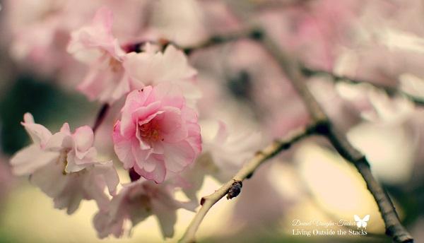 Week 14 Flowers {Living Outside the Stacks}
