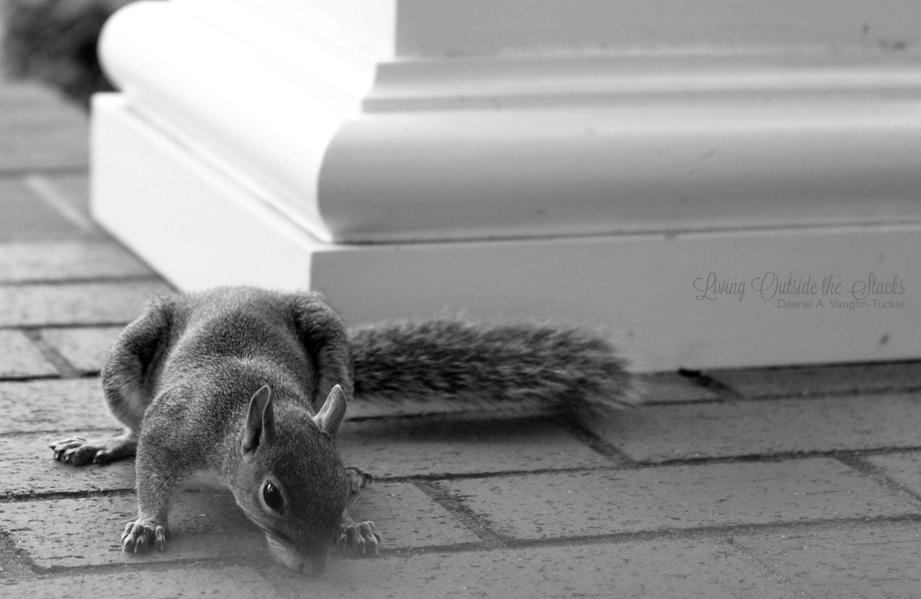 Porch Licking Squirrel {living outside the stacks}