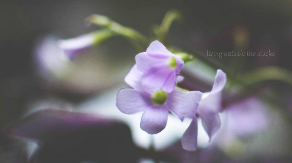 Flower {living outside the stacks}