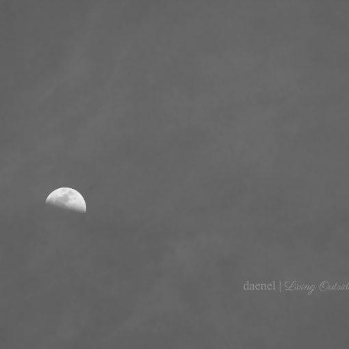 Week 12 Moon {living outside the stacks}