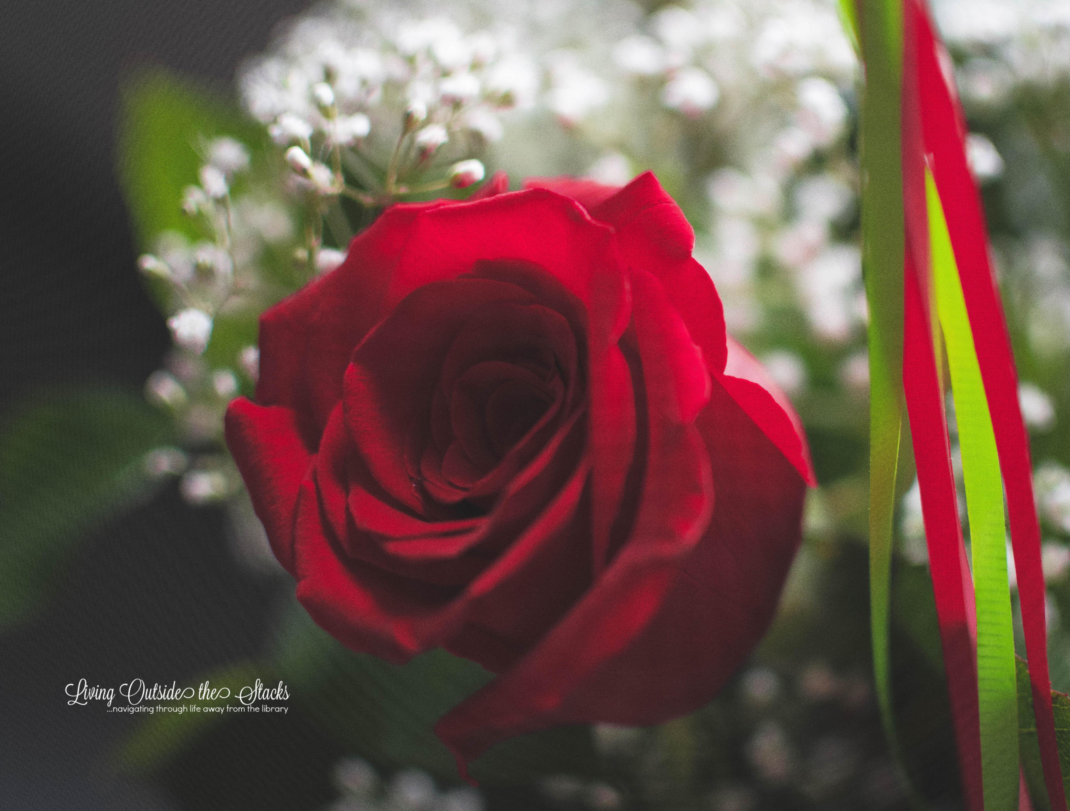 Birthday Rose {living outside the stacks}