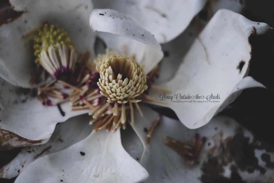 9 May My Favorite Flower {living outside the stacks} Follow me on Instagram @DaenelT