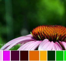 Flower by Daenel T {living outside the stacks}