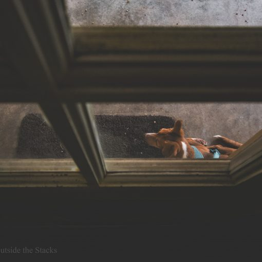 Bleu Chrys {living outside the stacks} #BleuChrys #AdoptDontShop