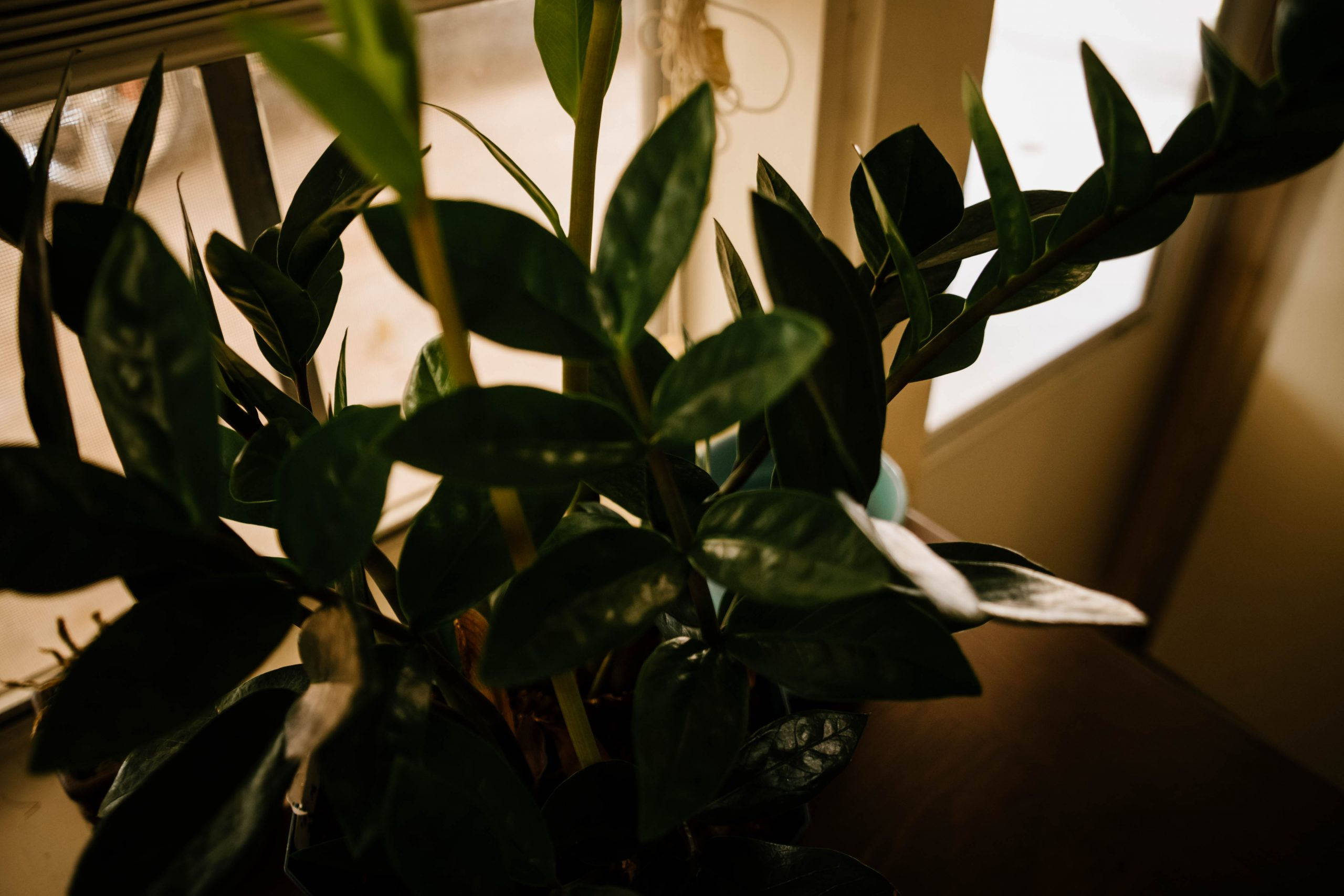 Rescued Plant {living outside the stacks}